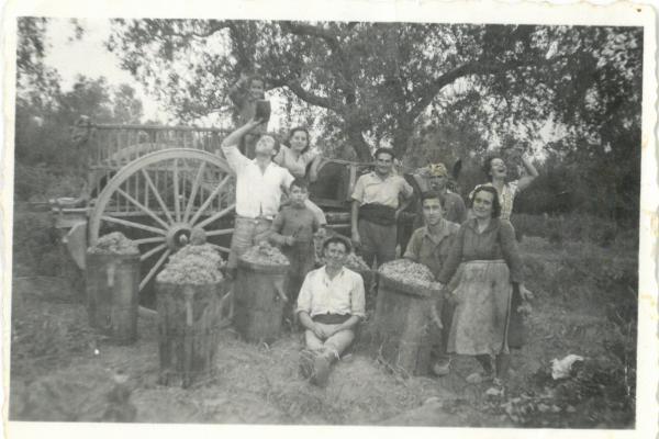 Verema de 1952. Fons Masdeu Camafort.